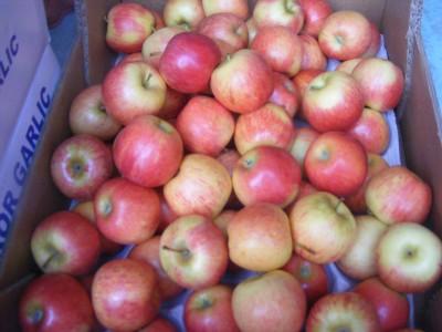 Gala obuoliai